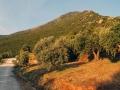 019_athos_greece_0061