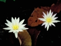 059_cambodia_2004_134