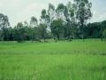 062_cambodia_2004_272