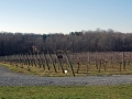 01_childressvineyards2017_0322