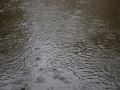 01_floods_2010_0003