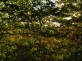 01_gozdni-plodovi_201112_0293