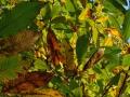 21_gozdni-plodovi_201112_0291