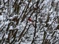 15_snow_storm_usa_2015_0208